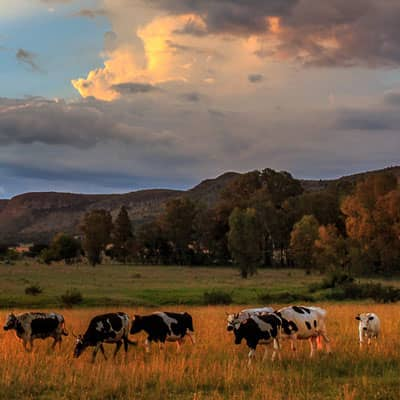Projects - The Mountain Livestock Cooperative